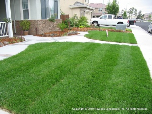 Lawns & Irrigation
